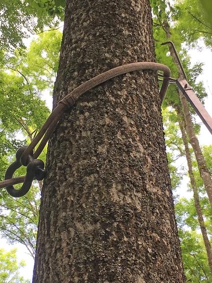 Eine Kralle und Seil am Baum befestigt