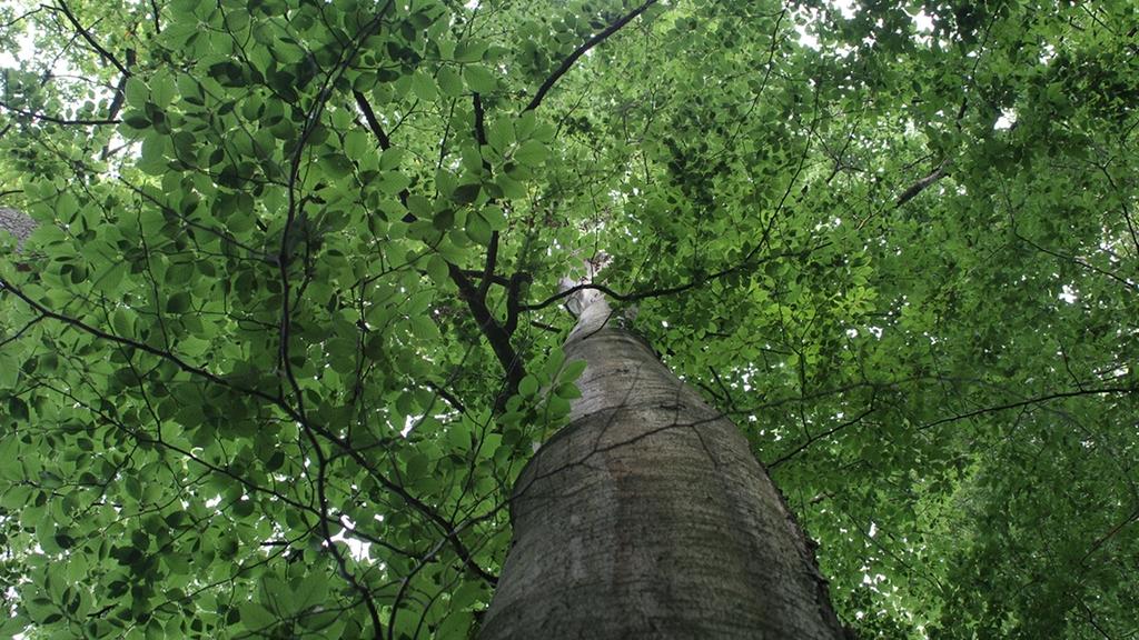 Blick von unten nach oben in eine dichte Baumkrone