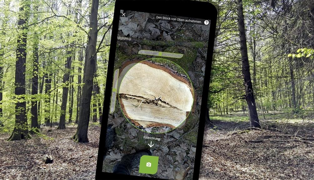 Aufnahme einer Baumrinde auf einem Handy Display zu sehen