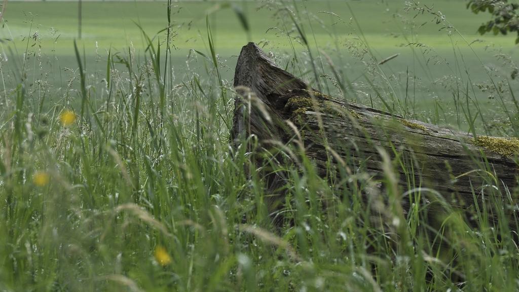 umgefallener Baumstamm in einer Wiese
