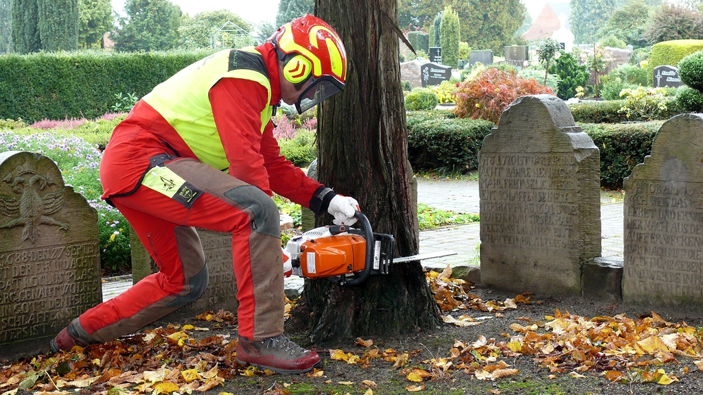 Ein Gartenbauer in Schutzausrüstung legt die Motorsäge zur Fällung an einen Baum auf dem Friedhof an.
