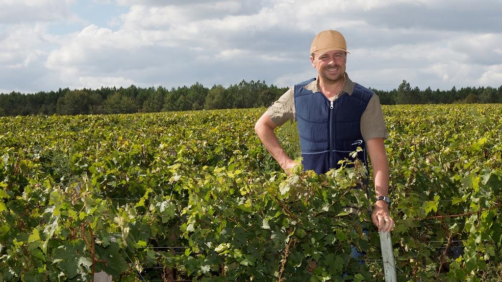 Arbeiter mit Kühlweste im Weinanbaugebiet