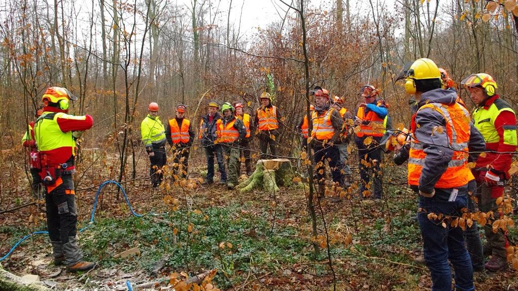 Waldarbeitende in Schutzkleidung stehen im herbstlichen Wald. Die Person links stellt das weitere Vorgehen vor. Die Gruppe auf der rechten Seite hört zu.