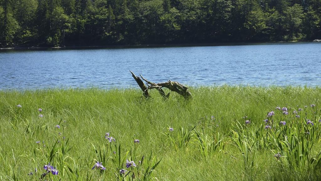 Wiese am See mit Wald