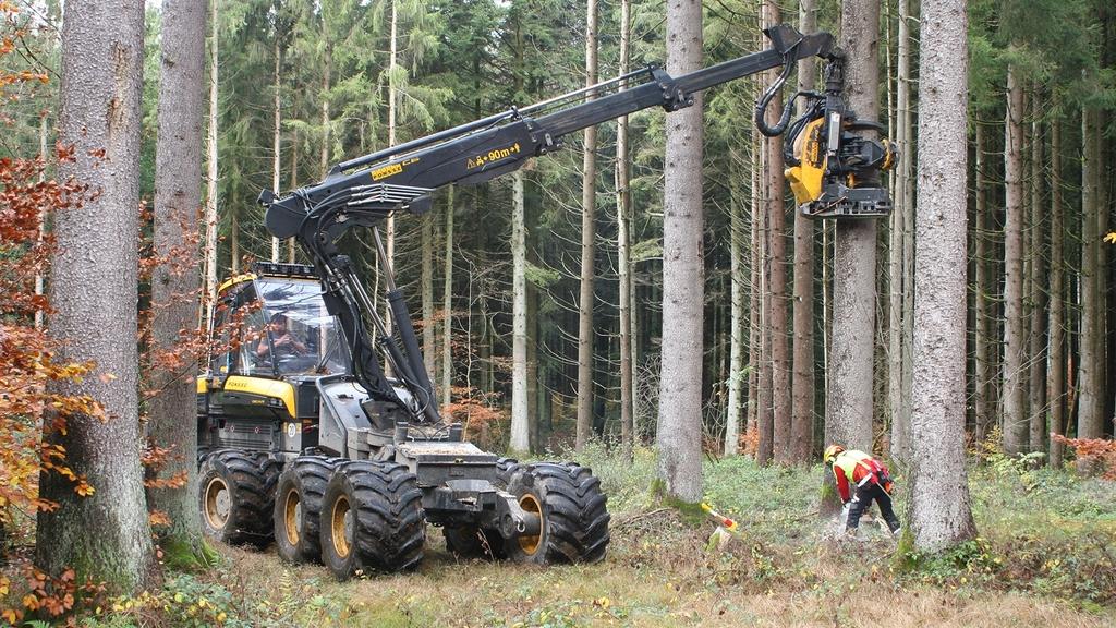 Ein Kran steht an einem Einzelbaum im Wald. Direkt darunter arbeitet ein Mann.