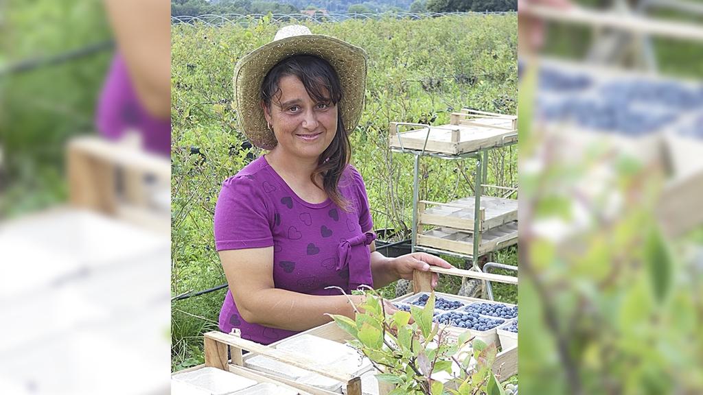 Bild:Frau mit Sonnenhut pflückt Blaubeeren