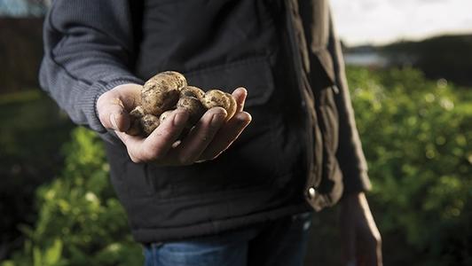 Mann hält Kartoffeln in der Hand
