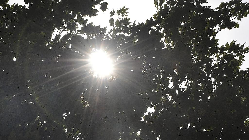 Gleissende Sonne scheint durch das Blätterdach eines Baumes.