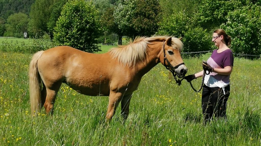 Auf einer Weide stehen ein hellbraunes Pferd und eine Frau einander zugewandt. Die Frau trägt Handschuhe und hält das Pferd am Halfter. Es ist der Moment vor dem Loslassen.