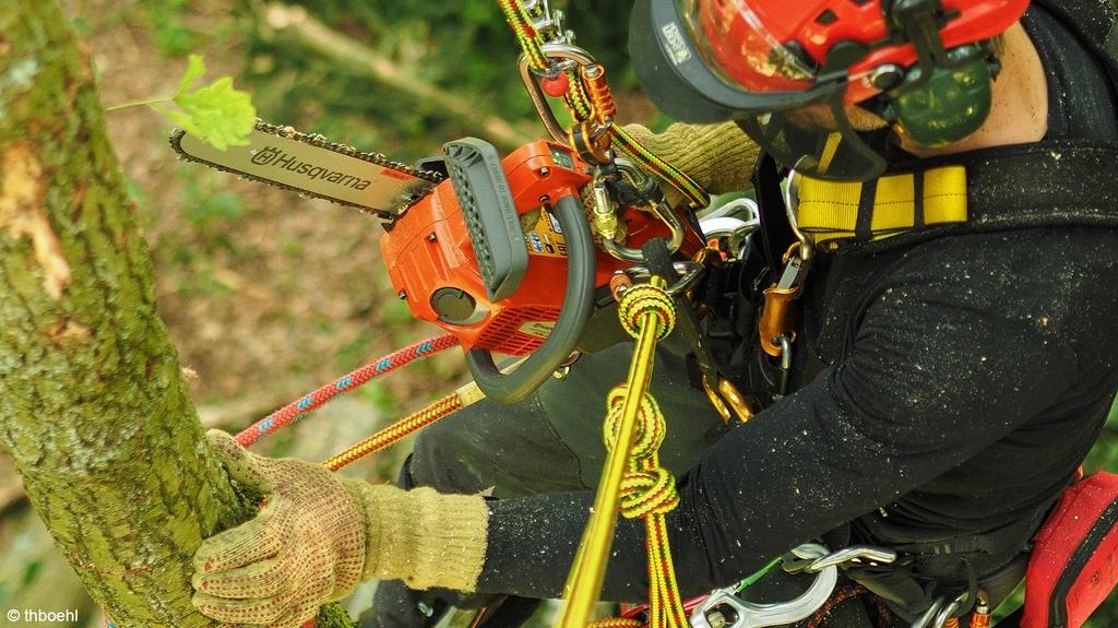 Mann angeseilt mit Baumklettertechnik am Baum und Motorsäge