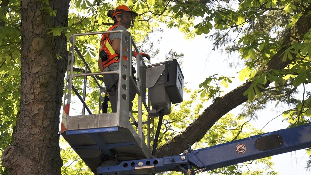 Mann in Hubarbeitsbühne bei Baumarbeiten