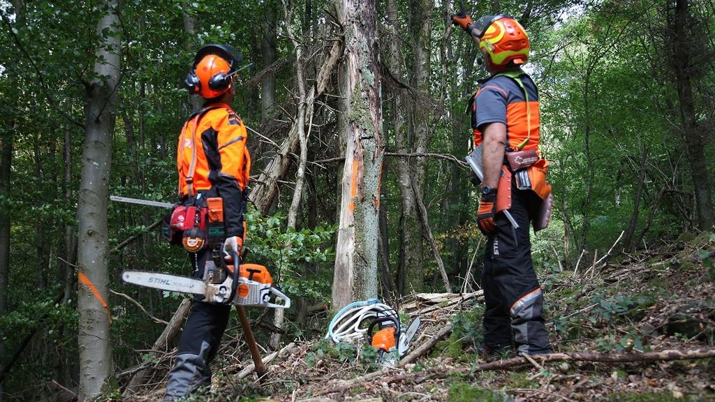 Zwei Forstarbeiter stehen vor einem stehenden Schadholzbaum und begutachten ob und wie eine Fällung erfolgen soll.
