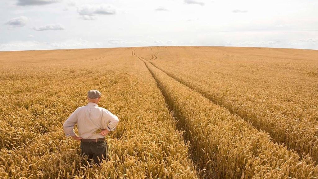 Alter Landwirt schaut auf ein reifes Getreidefeld, man sieht den Landwirt in Rückenansicht