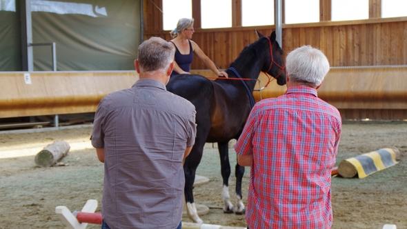 """Praxisvorführung im Seminar """"Pferde besser verstehen"""""""