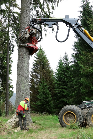 Ein Mann steht einem Baum im Wald und fällt diese mit einer Motorsäge, zusätzlich erhält er Hilfe bei der Fällung durch einen einem Kran, der den Baum stützt und schließlich zu Fall bringt.
