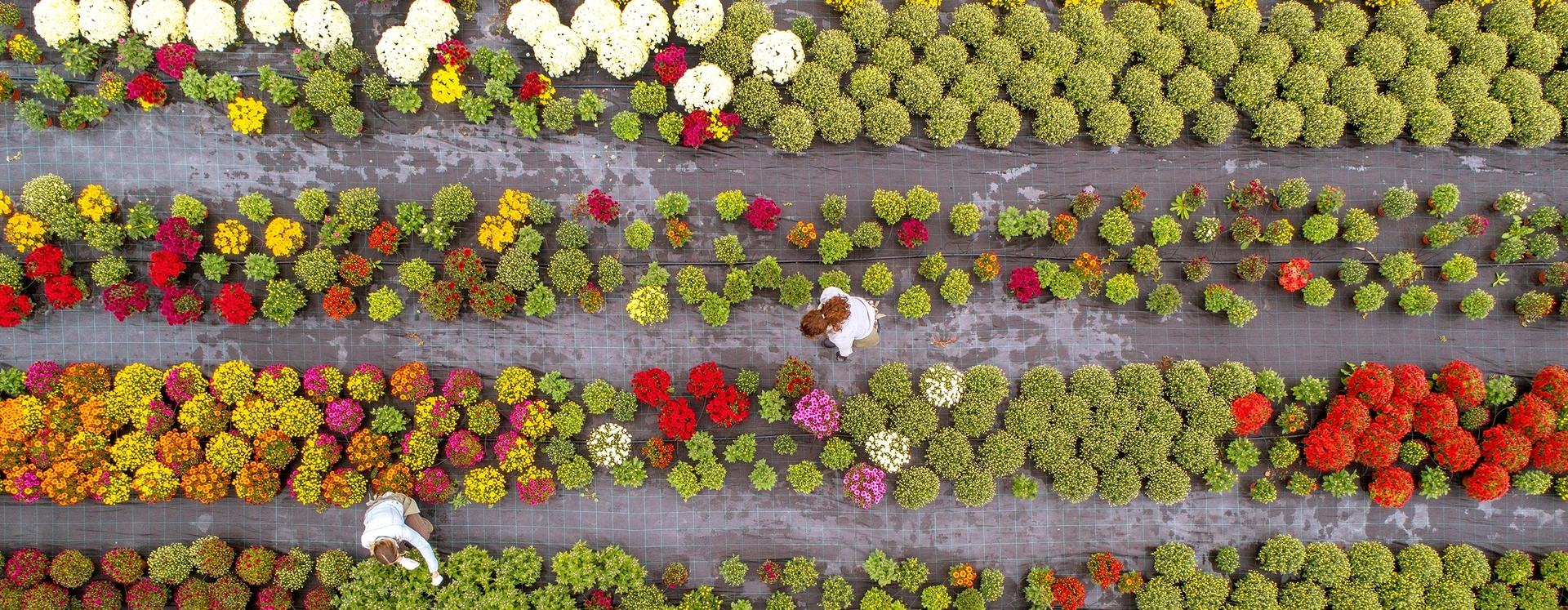 Blumen Freifläche Gartenbau