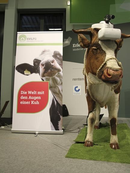 Modell-Kuh Marianne mit Kamera auf dem Kopf