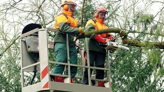 Zwei Männer bei Baumarbeiten