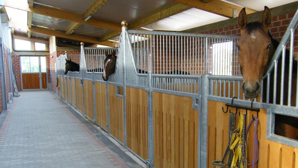 Moderne Gasse mit drei Pferdeboxen in einem Pferdestall. Aus jeder Box schaut ein Pferdekopf.