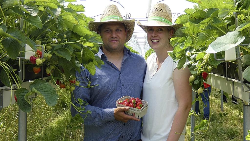 Bild: Mann und Frau mit Strohhüten im Erdbeerfeld